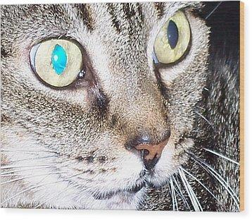 Cat Eyes Wood Print by Martha Hoskins