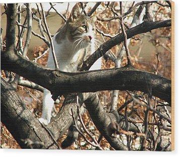 Cat Hunting Bird Wood Print by Judi Saunders