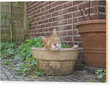 Wood Print featuring the photograph Cat In Empty Pot by Patricia Hofmeester