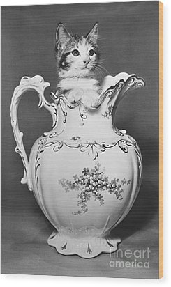 Cat In Pitcher Wood Print by Larry Keahey