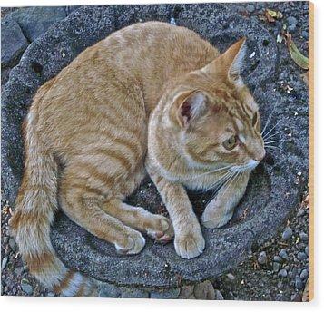 Cat In The Bath Wood Print by Gwyn Newcombe