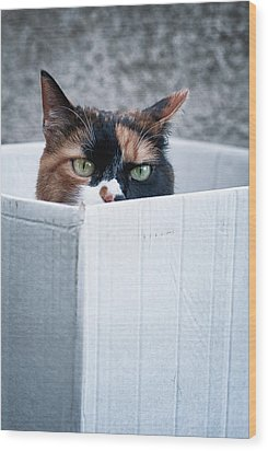 Wood Print featuring the photograph Cat In The Box by Laura Melis