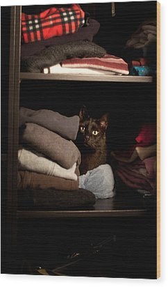 Wood Print featuring the photograph Cat In The Closet by Laura Melis