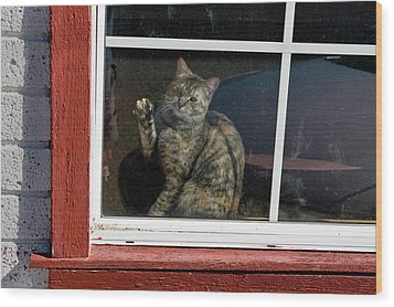 Cat In The Red  Window Wood Print