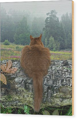 Wood Print featuring the photograph Cat In The Wild by Vladimir Kholostykh