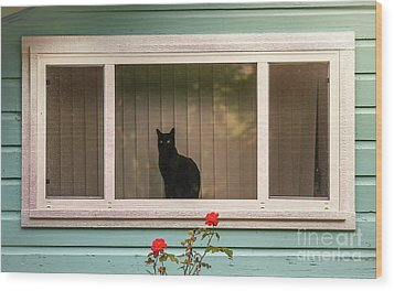 Cat In The Window Wood Print by Robert Frederick