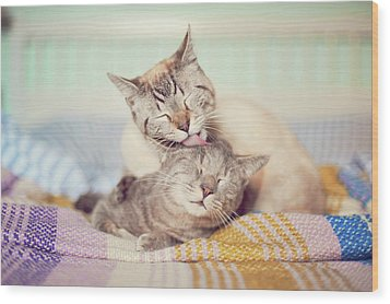 Cat Licking Another Cat Wood Print by Viola Tavazzani Photography