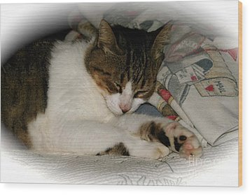Wood Print featuring the photograph Cat Nap by The Art of Alice Terrill