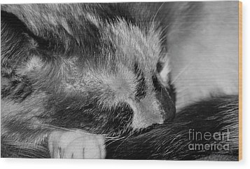Wood Print featuring the photograph Cat Nap by Juls Adams