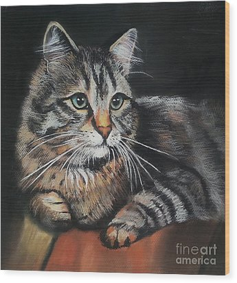 Cat Pastel Drawing Wood Print by Maja Sokolowska