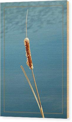 Cat Tail Wood Print