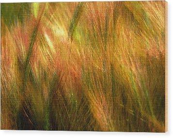 Cat Tails Wood Print by Paul Wear