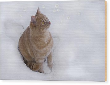 Cat With Snowflakes Wood Print