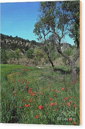 Catalan Countryside In Spring Wood Print by Don Pedro De Gracia