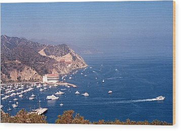 Catalina Calif............ Wood Print by Tanya Tanski