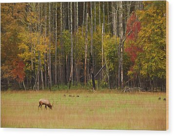 Cataloochee Valley Elk Wood Print