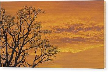 Catalpa Tree Sunrise Wood Print