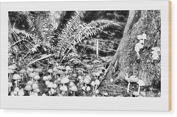 Caterpillars Playground 2 Wood Print by J D Banks