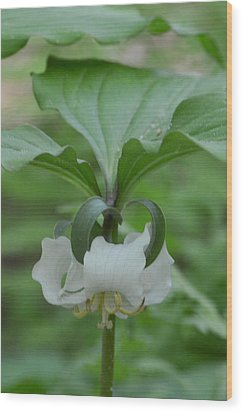 Wood Print featuring the photograph Catesby Trillium by Linda Geiger