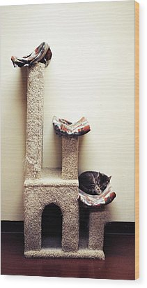 Catnapping   Human Society Wisconsin Wood Print by Laura Pineda