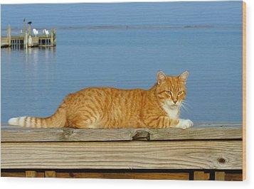 Cats 29 Wood Print by Joyce StJames