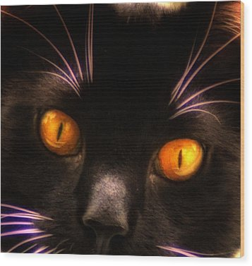 Cats Eyes Wood Print by Bill Cannon