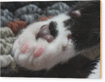 Cats Paw Wood Print by Kim Henderson