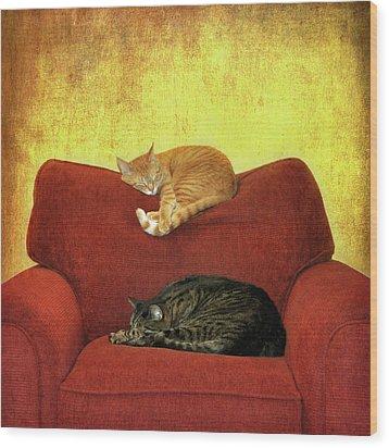 Cats Sleeping On Sofa Wood Print by Nancy J. Koch, Pittsburgh, PA