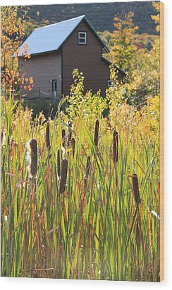 Cattails And Barn Wood Print