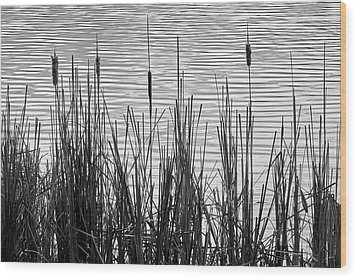 Cattails In A Minnesota Marsh Wood Print by Jim Hughes