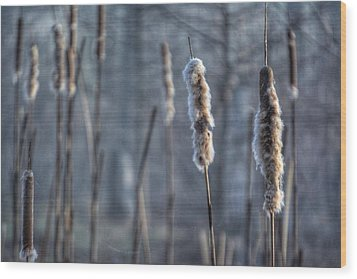 Wood Print featuring the photograph Cattails In The Winter by Sumoflam Photography