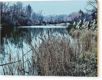 Cattails On The Water Wood Print