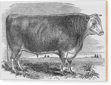 Cattle, C1880 Wood Print by Granger