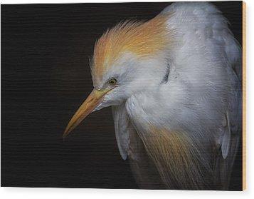 Cattle Egret Closeup Portrait Wood Print by David Gn