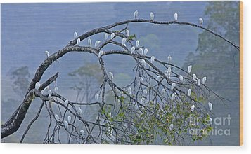 Cattle Egrets Wood Print