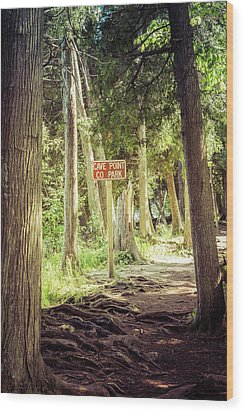 Wood Print featuring the photograph Cave Point Trails by Joel Witmeyer