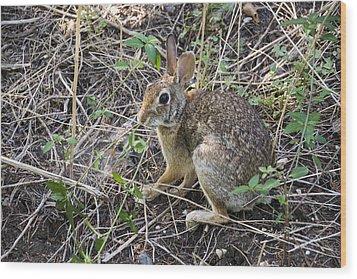 Cedar Hill Bunny Wood Print