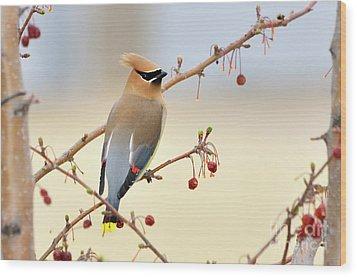 Cedar Waxwing Wood Print by Betty LaRue