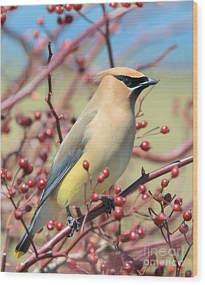 Wood Print featuring the photograph Cedar Waxwing by Debbie Stahre