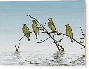 Cedar Waxwings On A Branch Wood Print