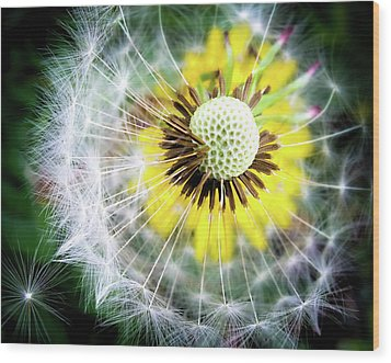 Celebration Of Nature Wood Print by Karen Wiles
