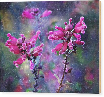 Celestial Blooms-2 Wood Print by Kathy M Krause