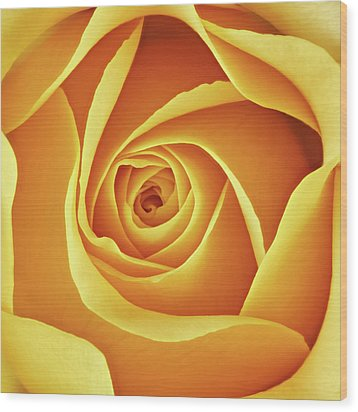 Wood Print featuring the photograph Center Of A Yellow Rose by Jim Hughes
