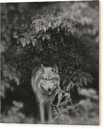 Center Of The Forest Wood Print by Debra     Vatalaro