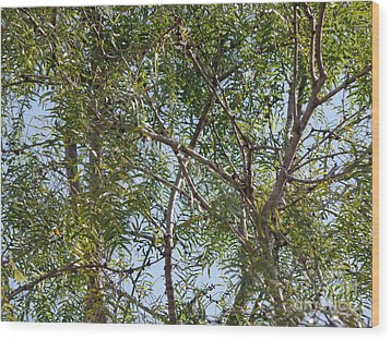 Wood Print featuring the photograph Central Texas Sky View Through Mesquite Trees by Ray Shrewsberry