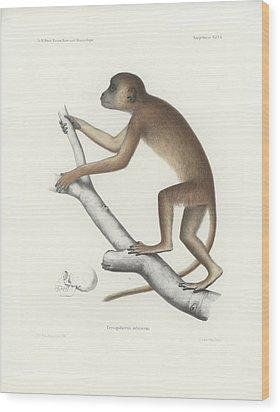 Central Yellow Baboon, Papio C. Cynocephalus Wood Print
