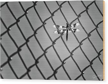 Chainlink Dragon Fly Wood Print