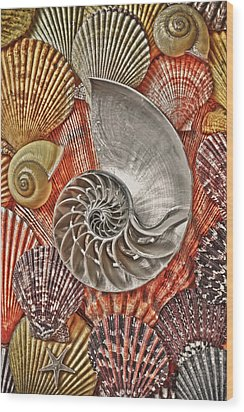 Chambered Nautilus Shell Abstract Wood Print by Garry Gay