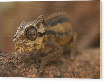 Wood Print featuring the photograph Chameleon by Riana Van Staden