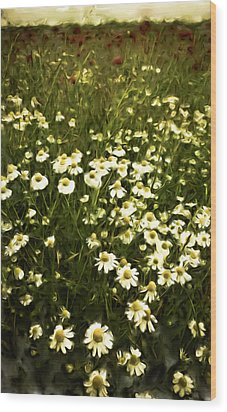 Wood Print featuring the painting Chamomile Lawn by Frank Tschakert